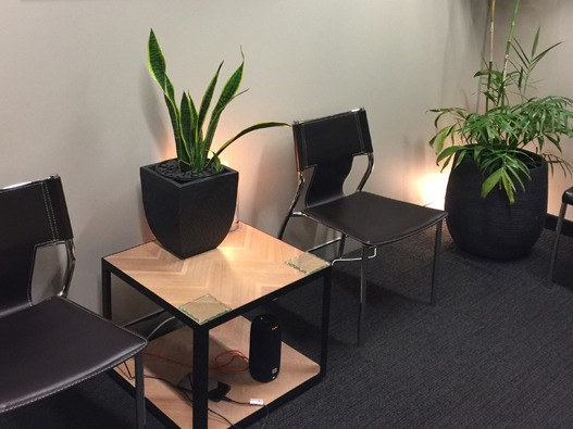 black chairs with some plants