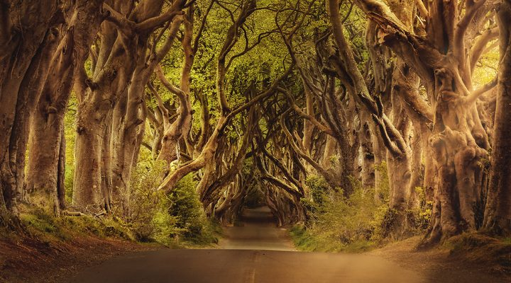 Road with an arch of trees | CFHP
